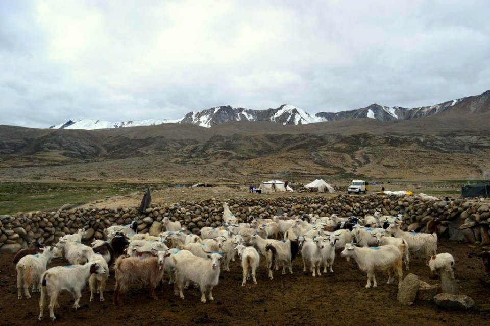 Visiting Tribal Nomads