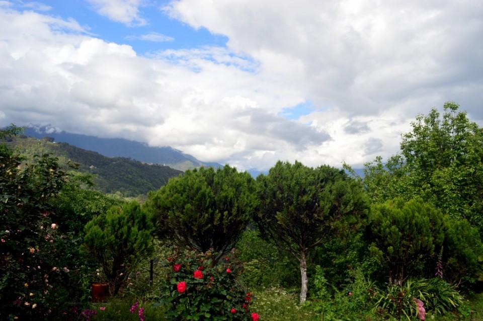 Arunachal Pradesh, store house of medicinal plants