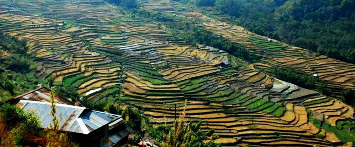 Nagaland - Wildlife