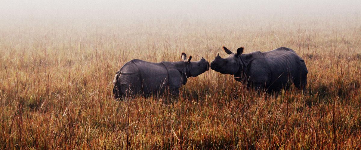 Assam - Wildlife