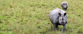 Kaziranga Safari in 1 Day